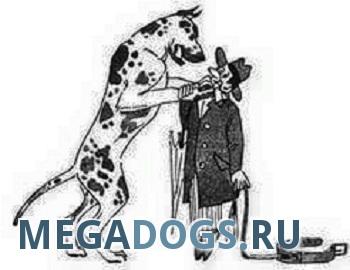 Сказки о доминировании собак
