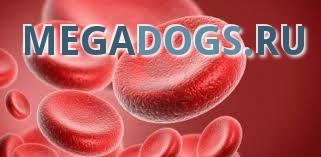 Расшифровка анализов крови у животных.