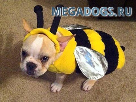 Что делать, если животное укусила оса/пчела.