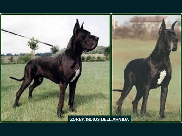 Zorba Indios dell'Armida