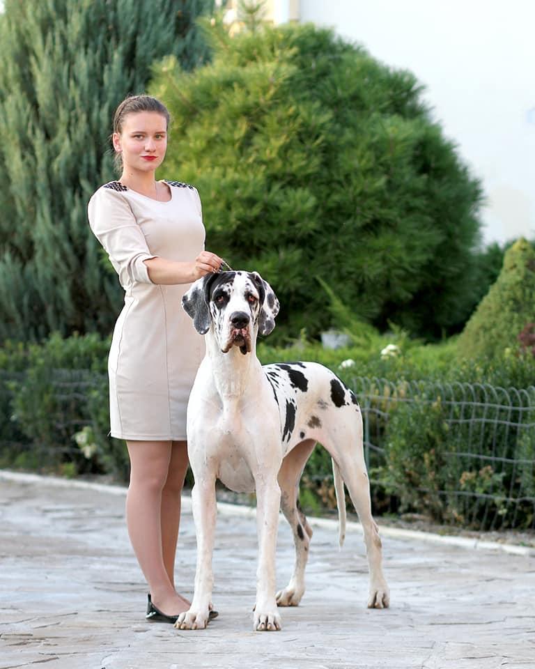 Голди Краунд Королева Изабелла