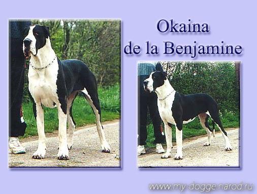 Okaina de la Benjamine