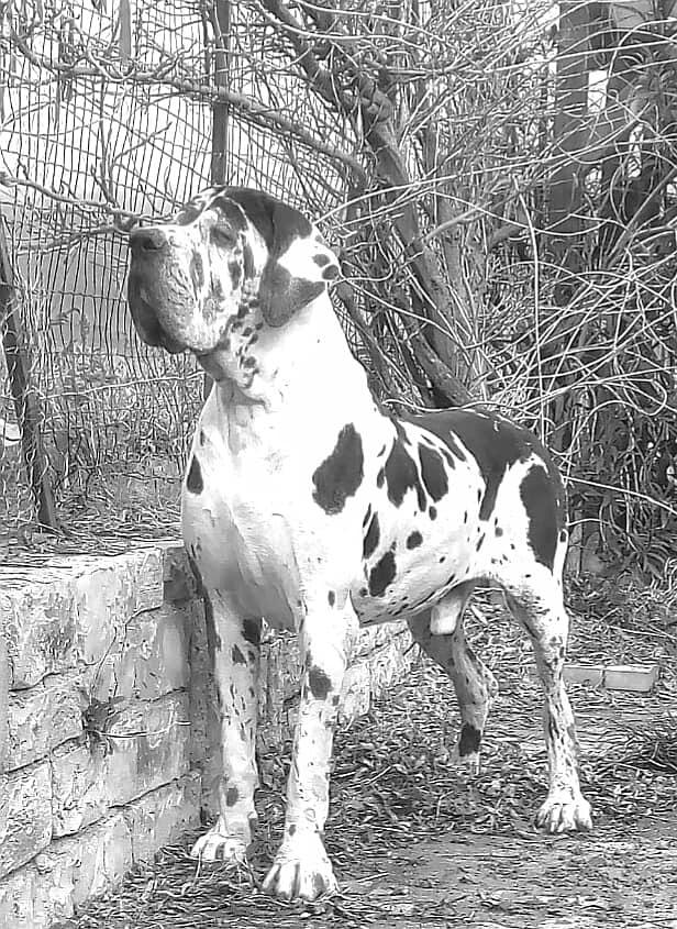 Black and White del Bianello