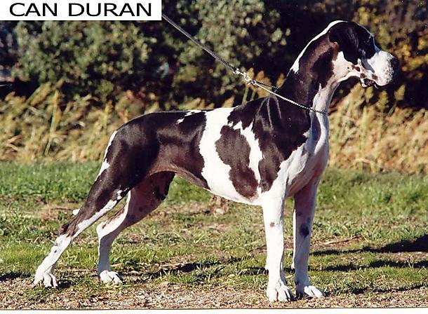 Ursula de Can Duran