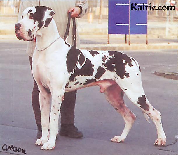 Amon Dog Eros