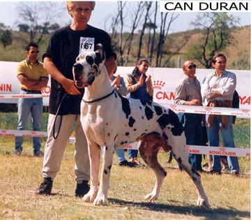 Ali Baba de Can Duran